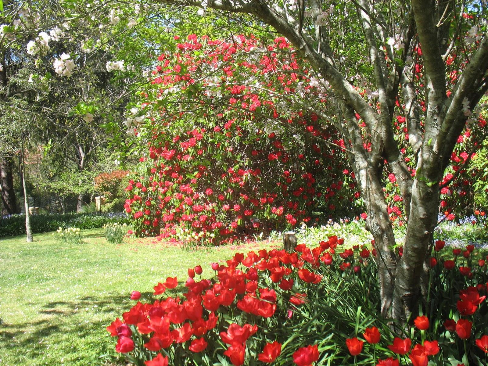 Beecroft and District Garden Club Inc.: RECENT CLUB ACTIVITIES