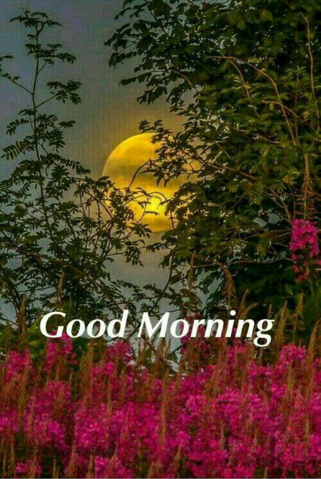 25 Good Morning Images With Flowers Hd Photos Download Whatsapp Status Images Dp Images