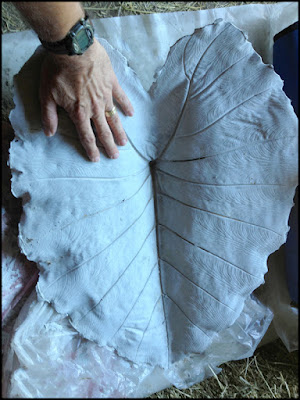 Molded Concrete Leaf after curing for 20 days at St Francis Cottage.