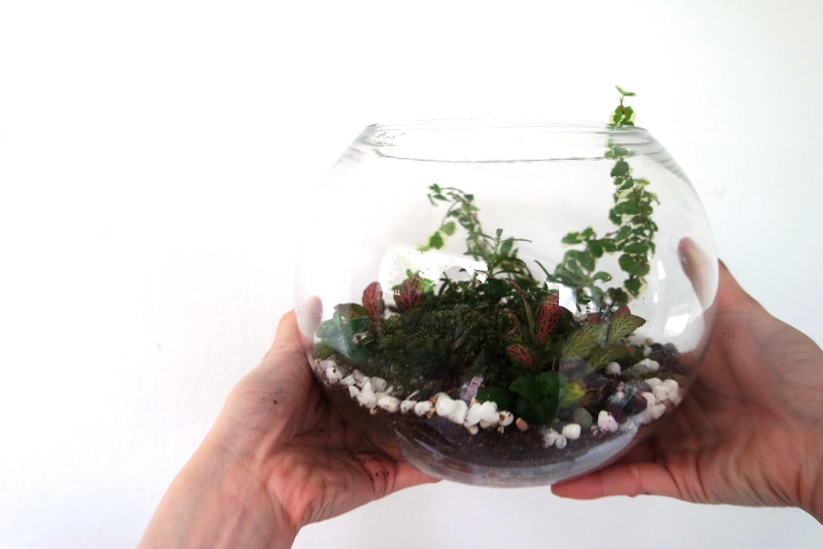 How To Diy Your Own Terrarium Esther Rachel