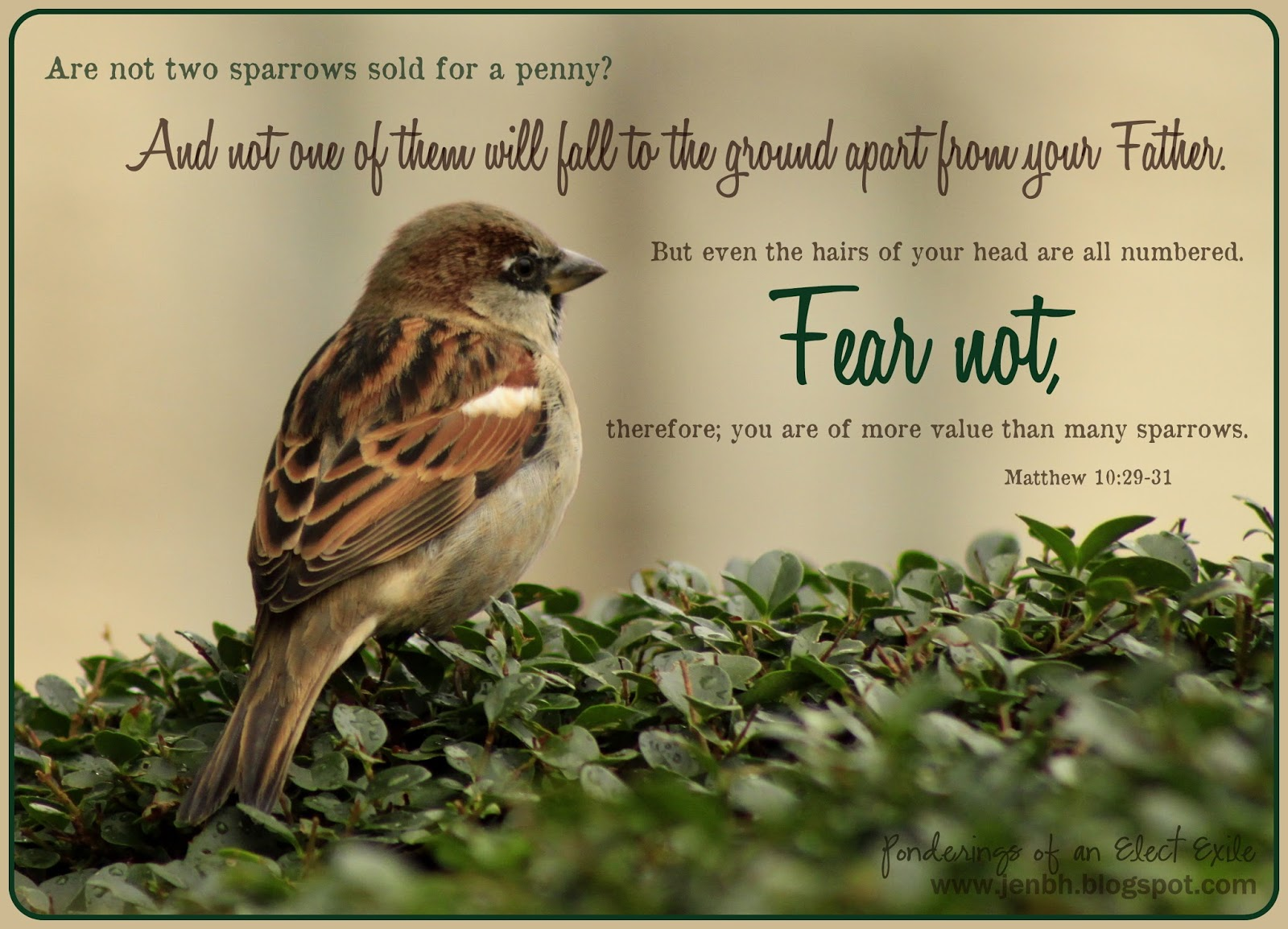 Ponderings Of An Elect Exile His Eye Is On The Sparrow