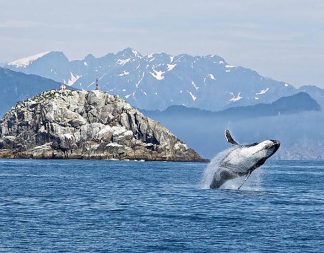 Ikuti Tur Kenai Fjords