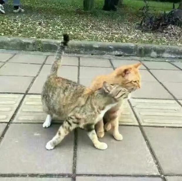 Khi phát hiện ra cô vợ ngoại tình, chú mèo này đã shock biết nhường nào