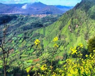 Bukit Kembang Lumbang Probolinggo