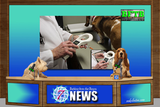 BFTB NETWoof News reports on microchipped dog reunion