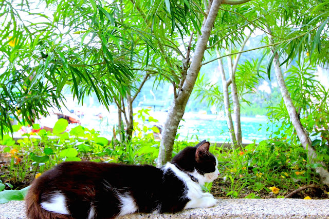 Cat Phi Phi Islands Travel Photography Guide Blogger in Thailand