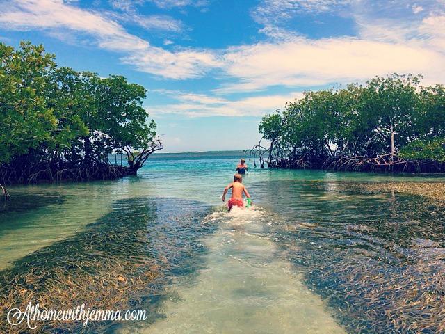 Mangrove-Gilligan's Island-ocean-sea-athomewithjemma