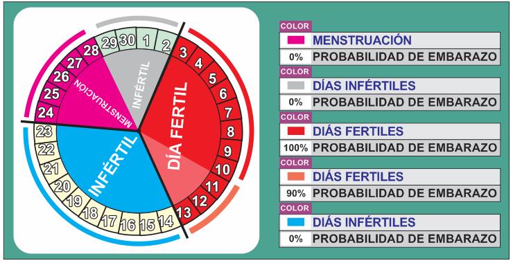 dia 30 del ciclo menstrual