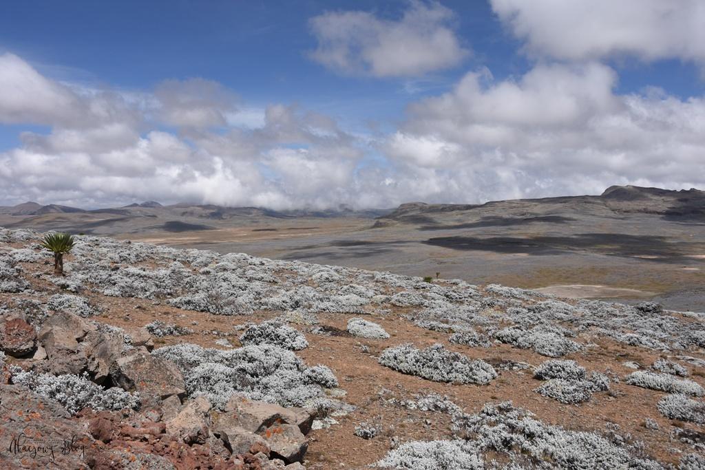 Podróż po Etiopii - część 10 - Świat ptaków i roślin płaskowyżu Sanetti.
