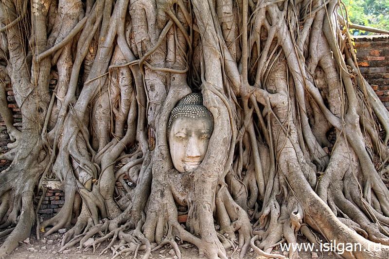 Голова Будды. Храм Ват Махатхат. Город Аюттайя. Таиланд