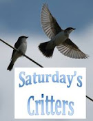 Saturday's Critters w/Eileen