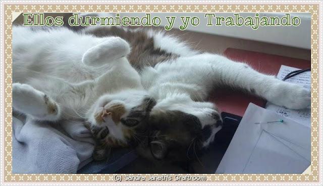 Gatos, Coco, Menchis