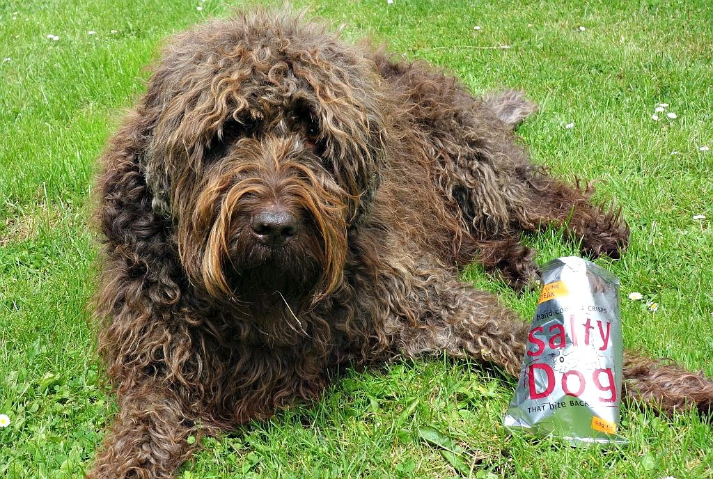 Jarvis labradoodle dog and crisps