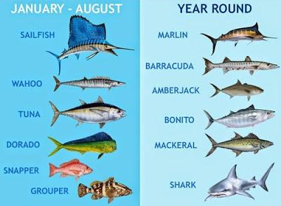 Meksika Cancun hangi  Balık ne zaman Avlanır. Av Takvimi