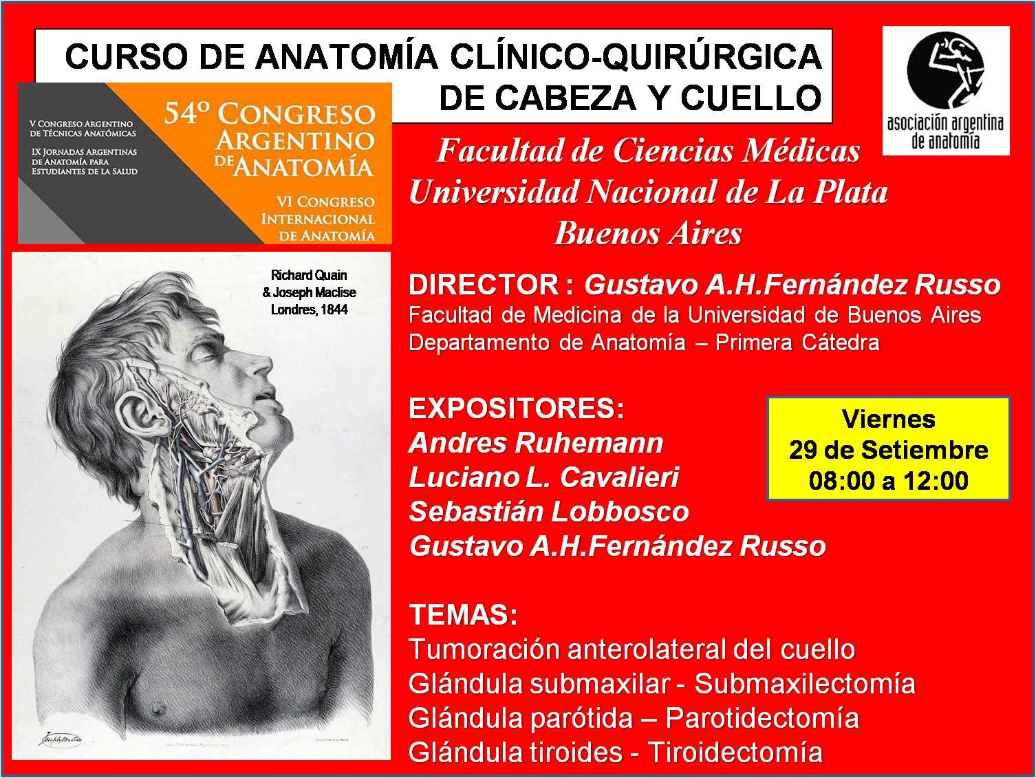 Bonito Anatomía Polea A1 Ornamento - Anatomía de Las Imágenesdel ...
