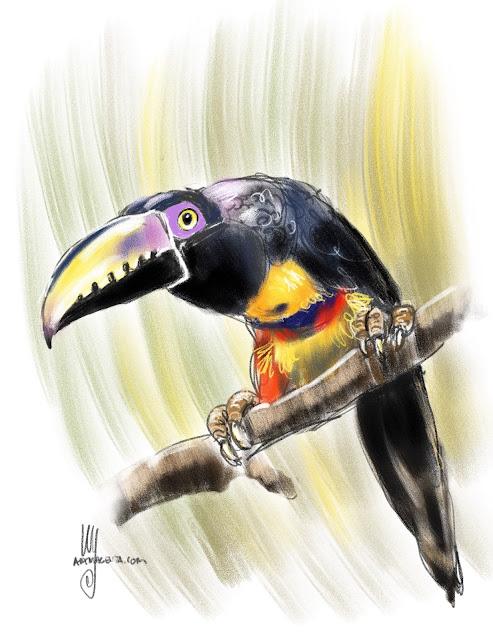 Collared Aracari Birdpainting by Ulf Artmagenta