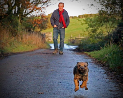 Border terrier running