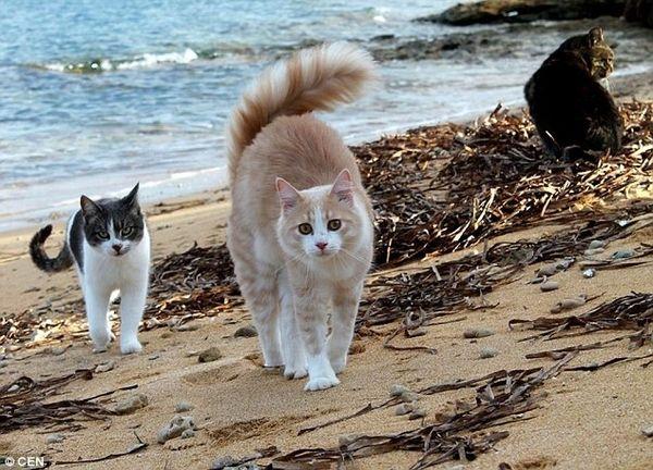 su pallosu sardinia cats beach