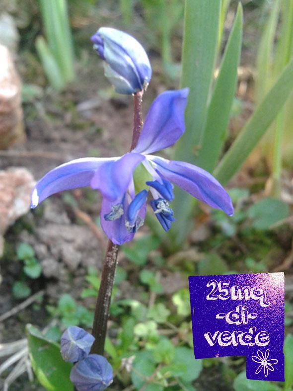L 39 abc del giardiniere incolto b come bulbi 25mq di verde - Bulbi estivi quando piantarli ...