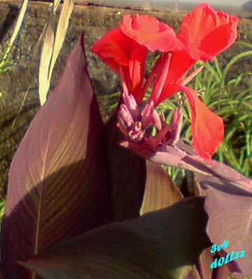 Menjulur teratur. Foto Bunga. Natural itu Cantik.