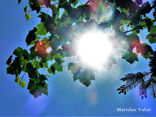 Sun and trees photography