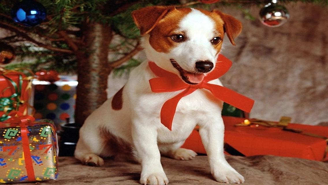 christmas puppy wallpaper - photo #31