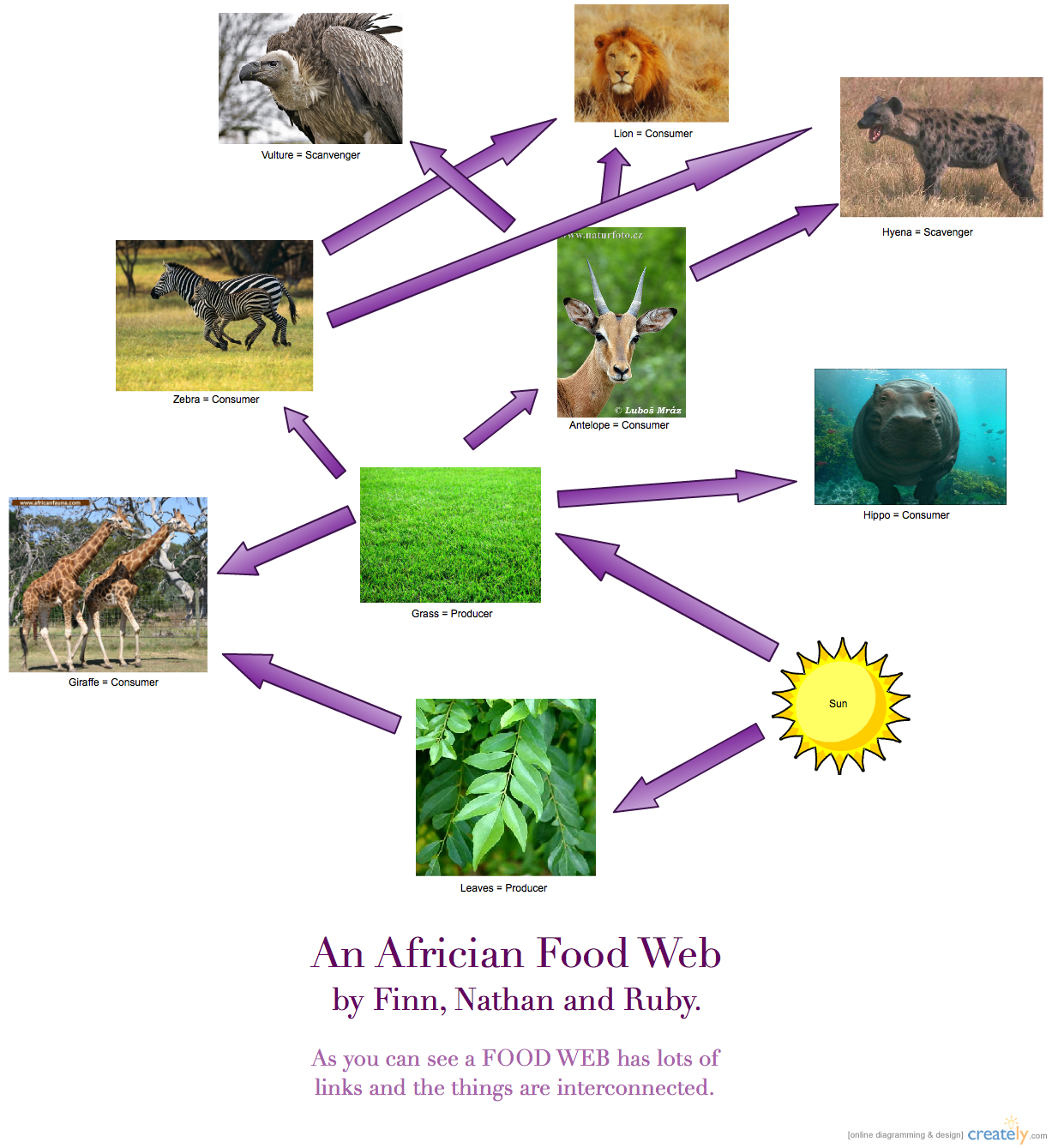 Learning Hub 3 2013 @ Stonefields School: Food Chains And