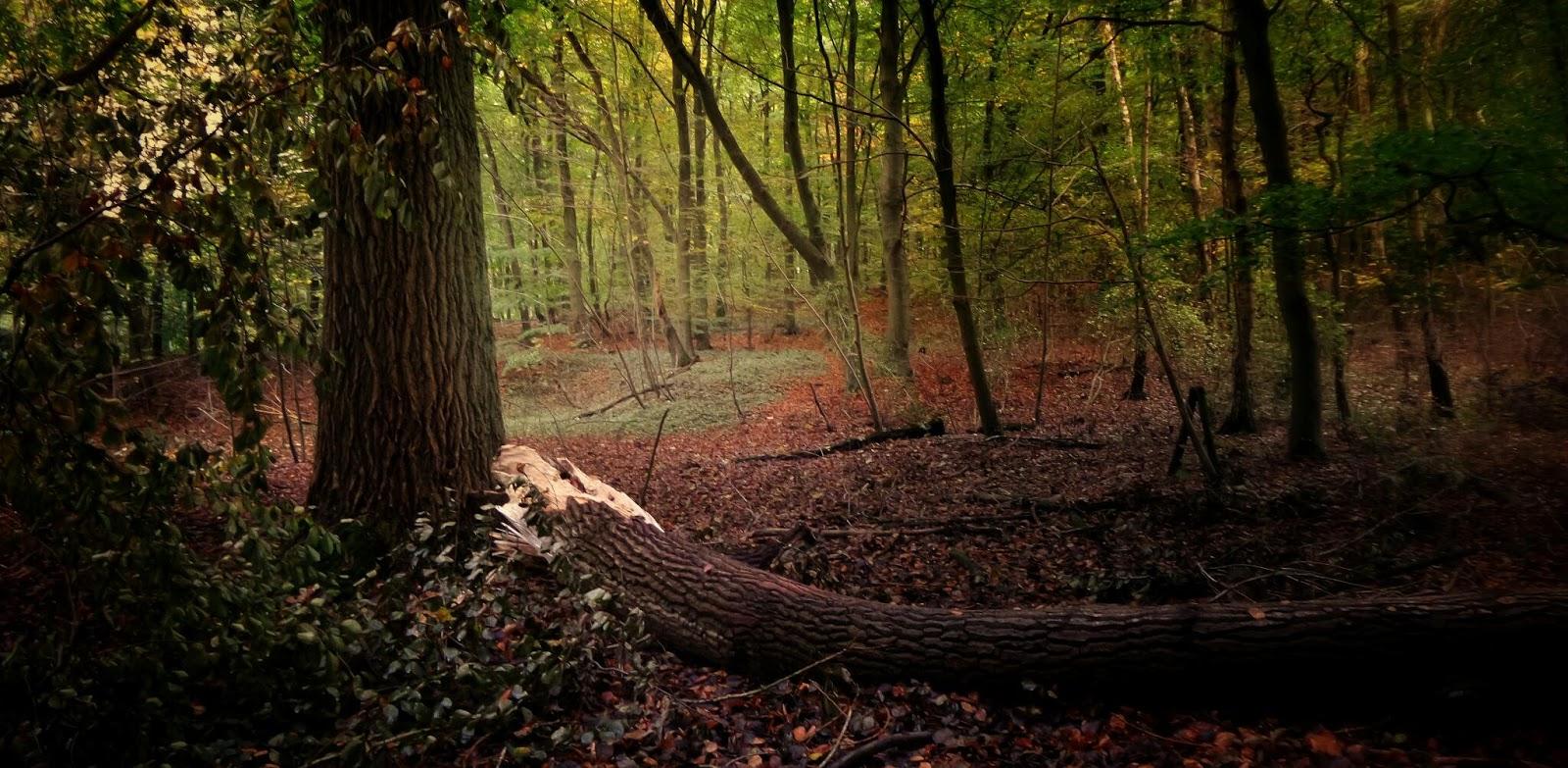 Fotografie Mit Heinz Ehrhard Im Wald