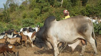 SAM 2159%2B %2BCopy - Ufugaji katika shamba la Rushu Ranchi Kisarawe