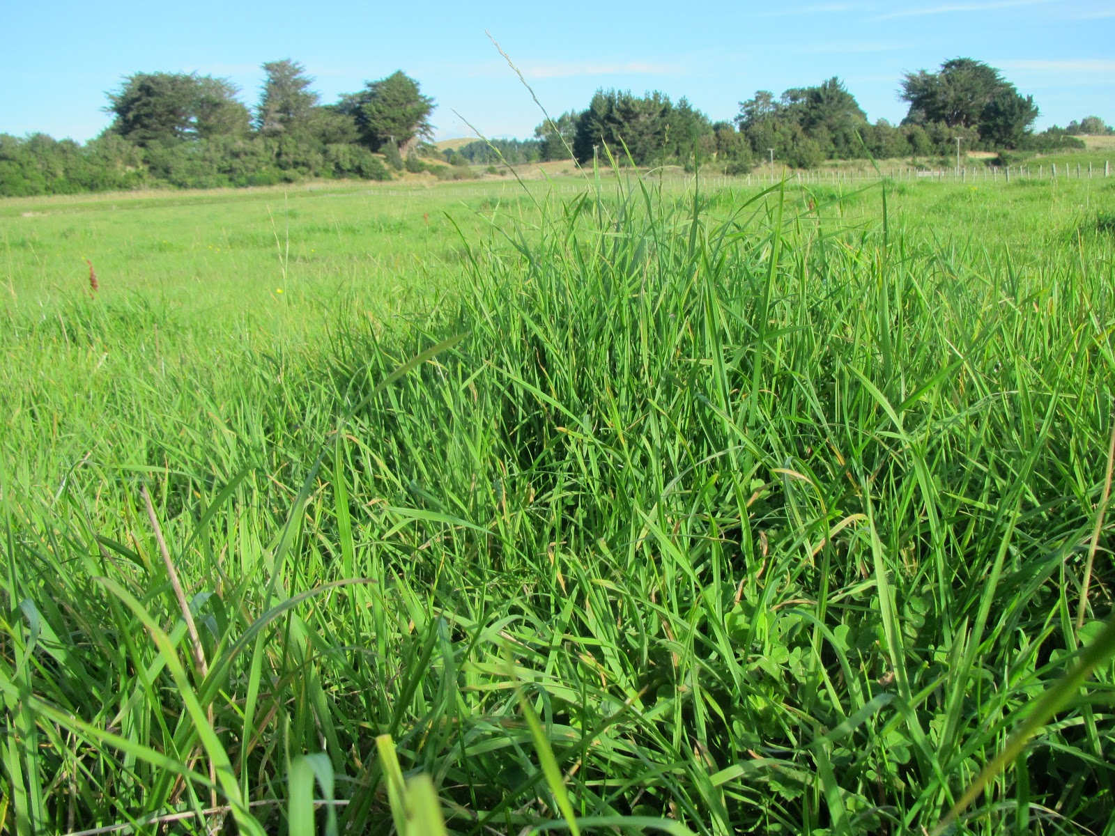 Pasture to Profit: If You Don't Measure You Can't Control ...
