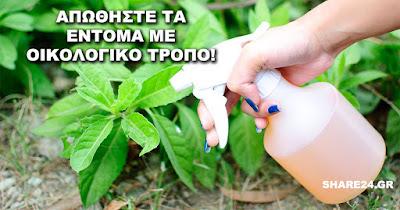 Φτιάξτε Μόνοι Σας Οικολογικό Εντομοκτόνο για να Καταπολεμήσετε τα Έντομα στον Κήπο!