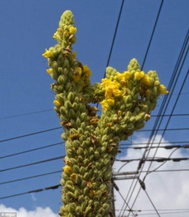 URANIUM PLUTONIUM NUCLEAR MOX WASTE POWER PLANT MINING ...