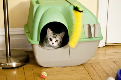 Finding the Best Home for a Cat