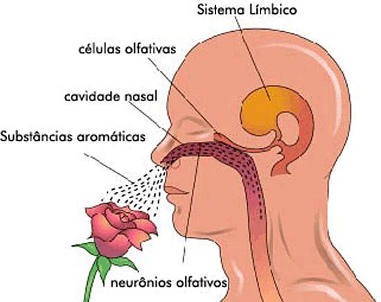 Sistema olfativo humano