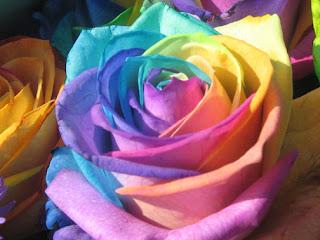 أنواع الورود  والأزهار ومعانيها  types of flowers and names