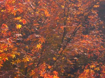 東福寺の紅葉〔絶景〕