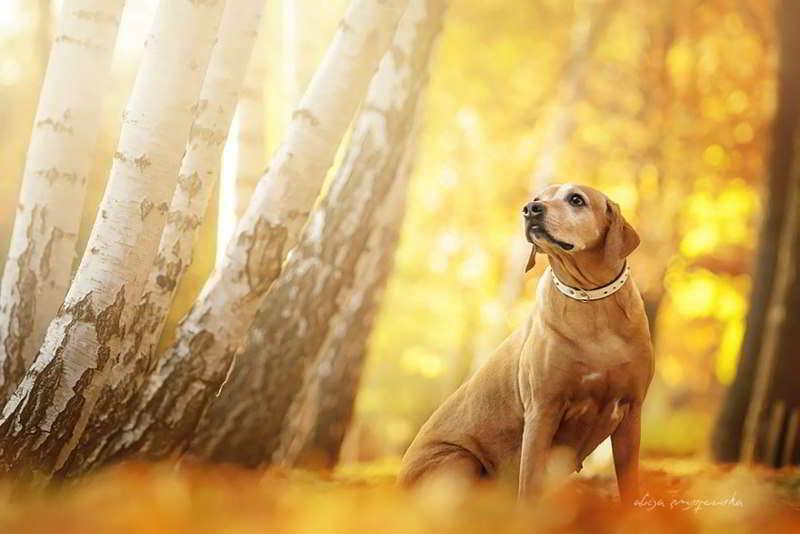 dog-photography-alicja-zmyslowska-10