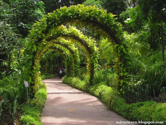 Национальный сад орхидей, Сингапур