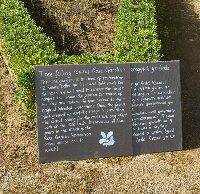 sign describing the work to be done on the rose garden, in English and Welsh