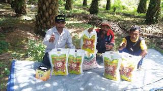 http://www.distributorpupuknasa.com/2019/05/pupuk-terbaik-untuk-sawit.html