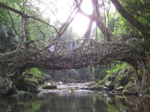 jingkieng deingjris - living bridge