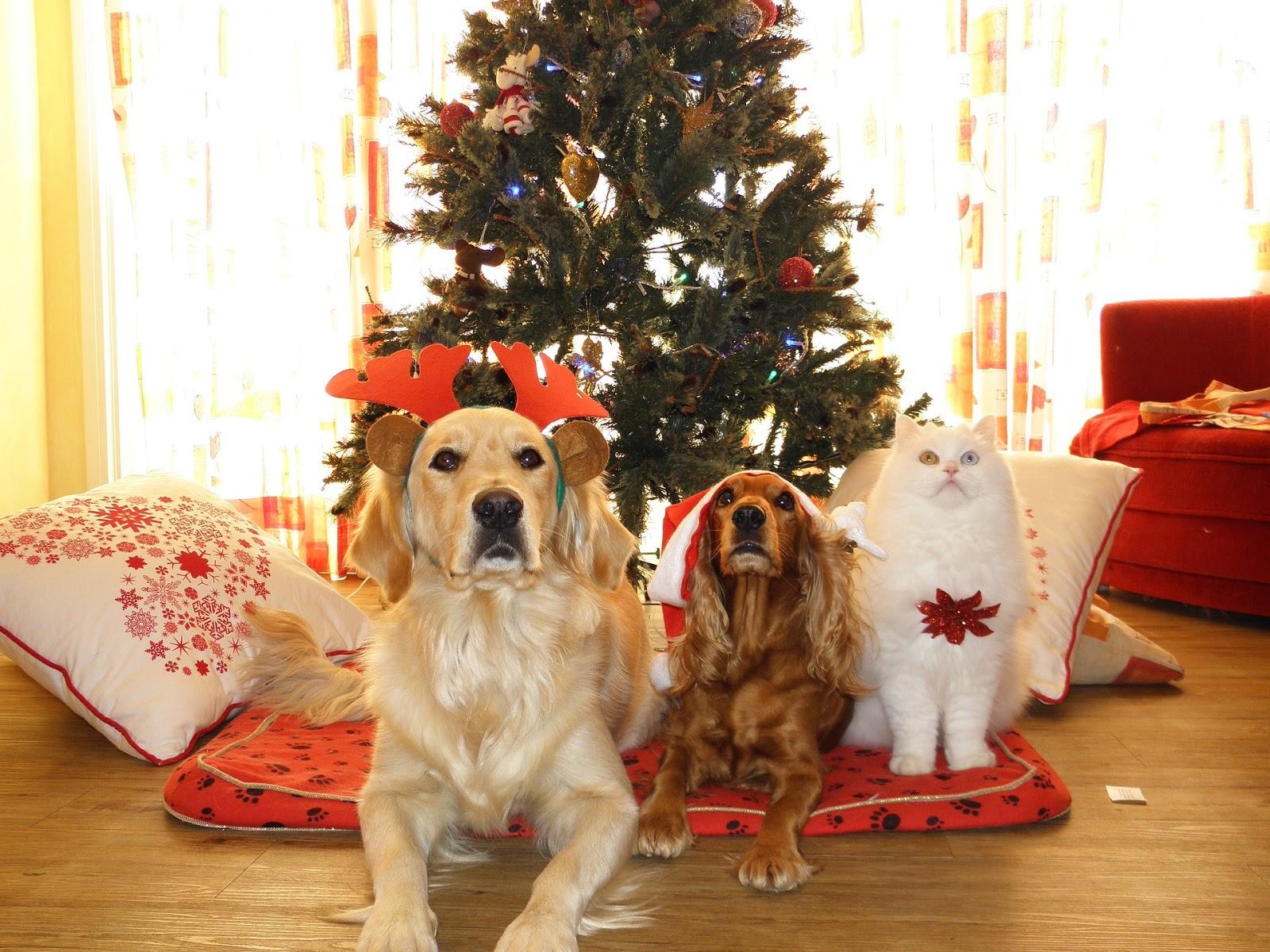 Weihnachtsgeschenke für Hunde: Ideen, die Spaß machen und gut sind ...