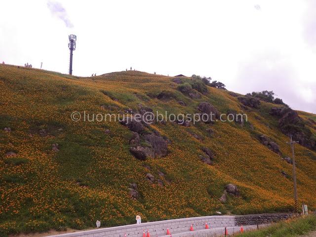 Hualien Sixty Stone Mountain daylily flowers