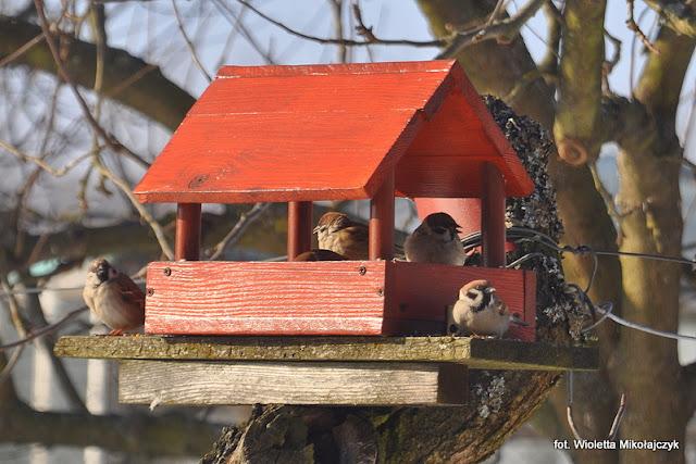 #FOTOGRAFICZNIE: Zima, ptaki i ośnieżone pola.