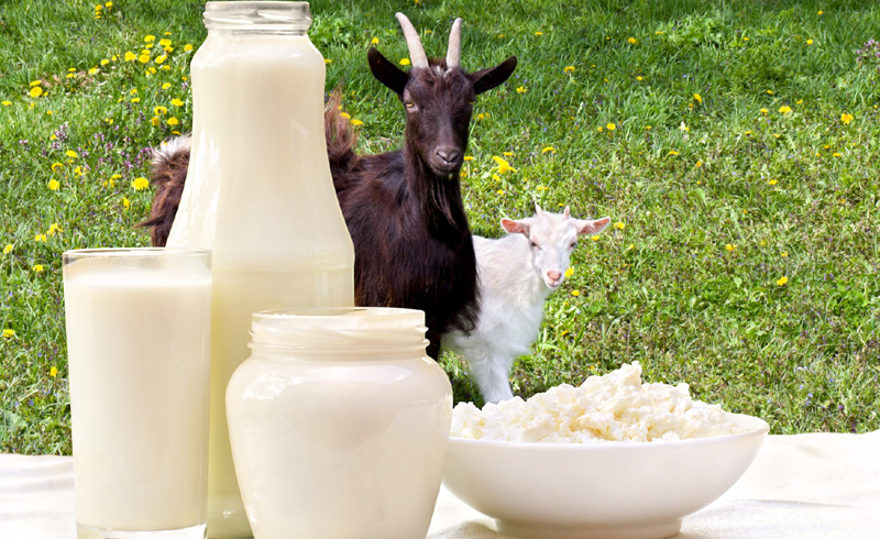 Goat Milk Is the Secret to Beautiful Skin