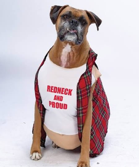 Photos of Hilarious Dogs in Costumes & Top 13 Photos of Hilarious Dogs in Costumes ~ Dog Training Solution