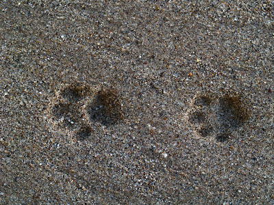 Image result for cat prints in mud