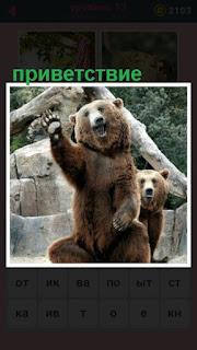 сидит медведь и поднял лапу в качестве приветствия
