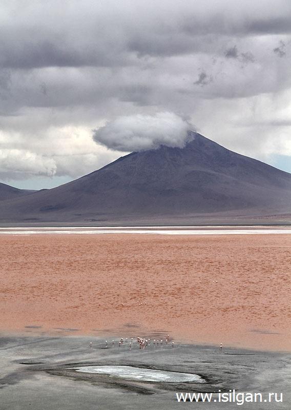 Laguna-Colorado-Nacionalnyj-zapovednik-Avaroa-Eduardo-Andean-Fauna-National-Reserve-Bolivia