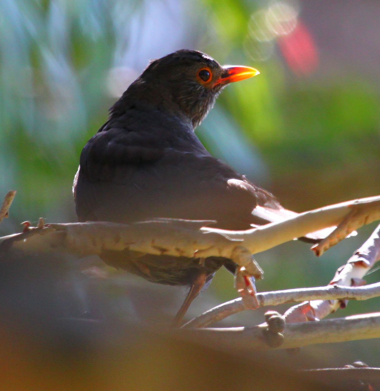 Phillip Island Australia: Richard Waring's Birds Of Australia: Selection Of Phillip